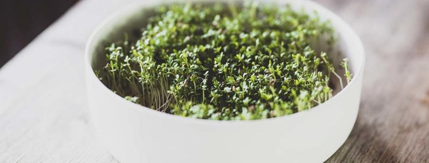 Kresse pflanzen 1